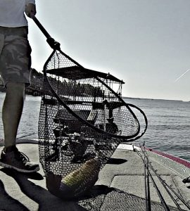 Best Fishing Nets for Landing Big Bass